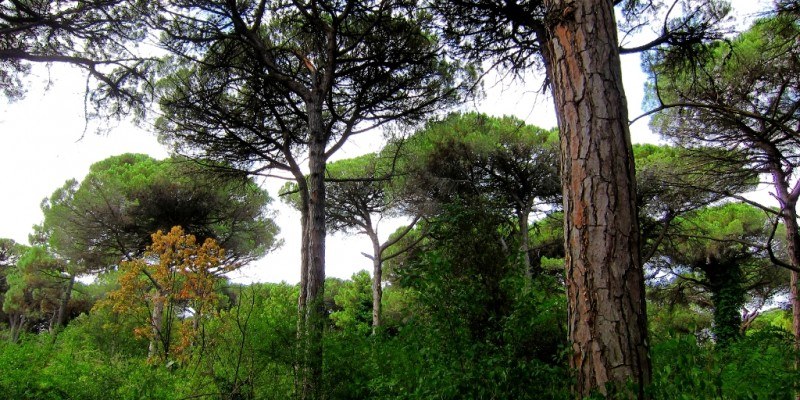 pinewood Milano Marittima